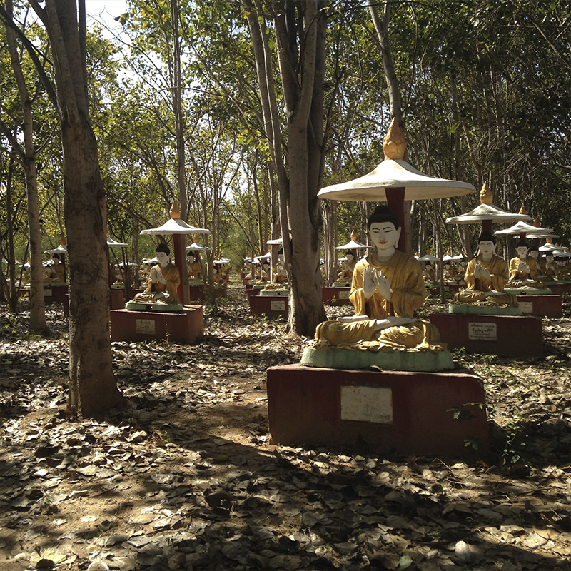 bosque-myanmar